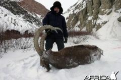 Kyrgyzstan_Ibex_2015